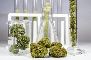 Buy Cannabis Oil
